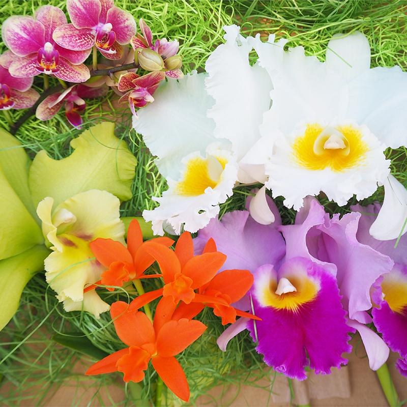 【たがみオーキッド】〈旬の切り花〉 カトレアと胡蝶蘭の彩りセット M